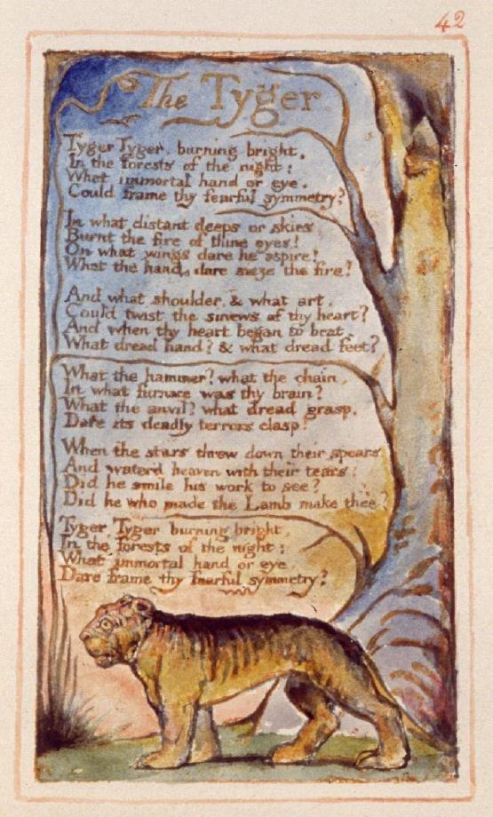 Whatever You're Havin' #12 – tiger, tiger, burning bright