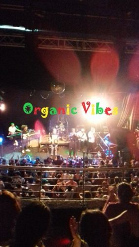 Organic Vibes 29 07 2019 | Radioactive International